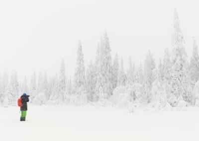 Vinterstemning i granskogen i Trysil med snøtunge graner.